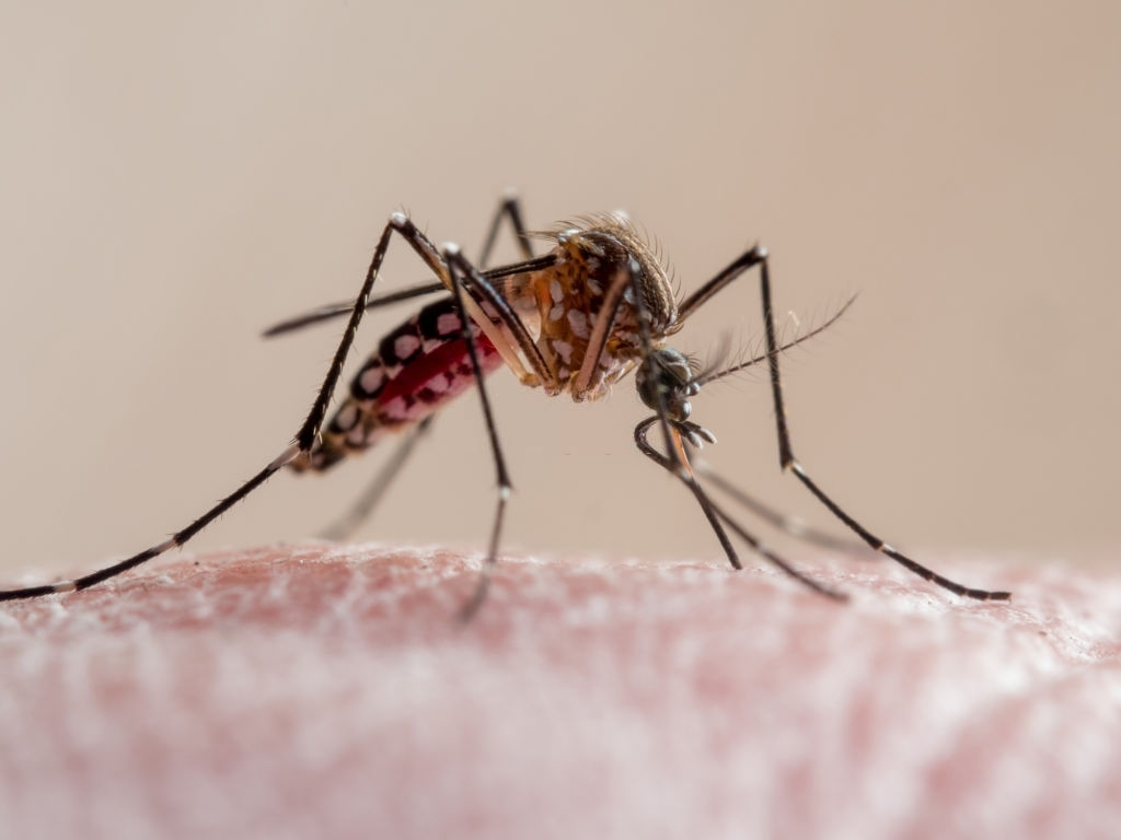 Understanding How Mosquitoes Track Humans Can Save Lives